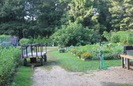 community garden 3