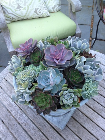 Succulents Can Be Brought In During The Winter And Brought Outside In Spring.