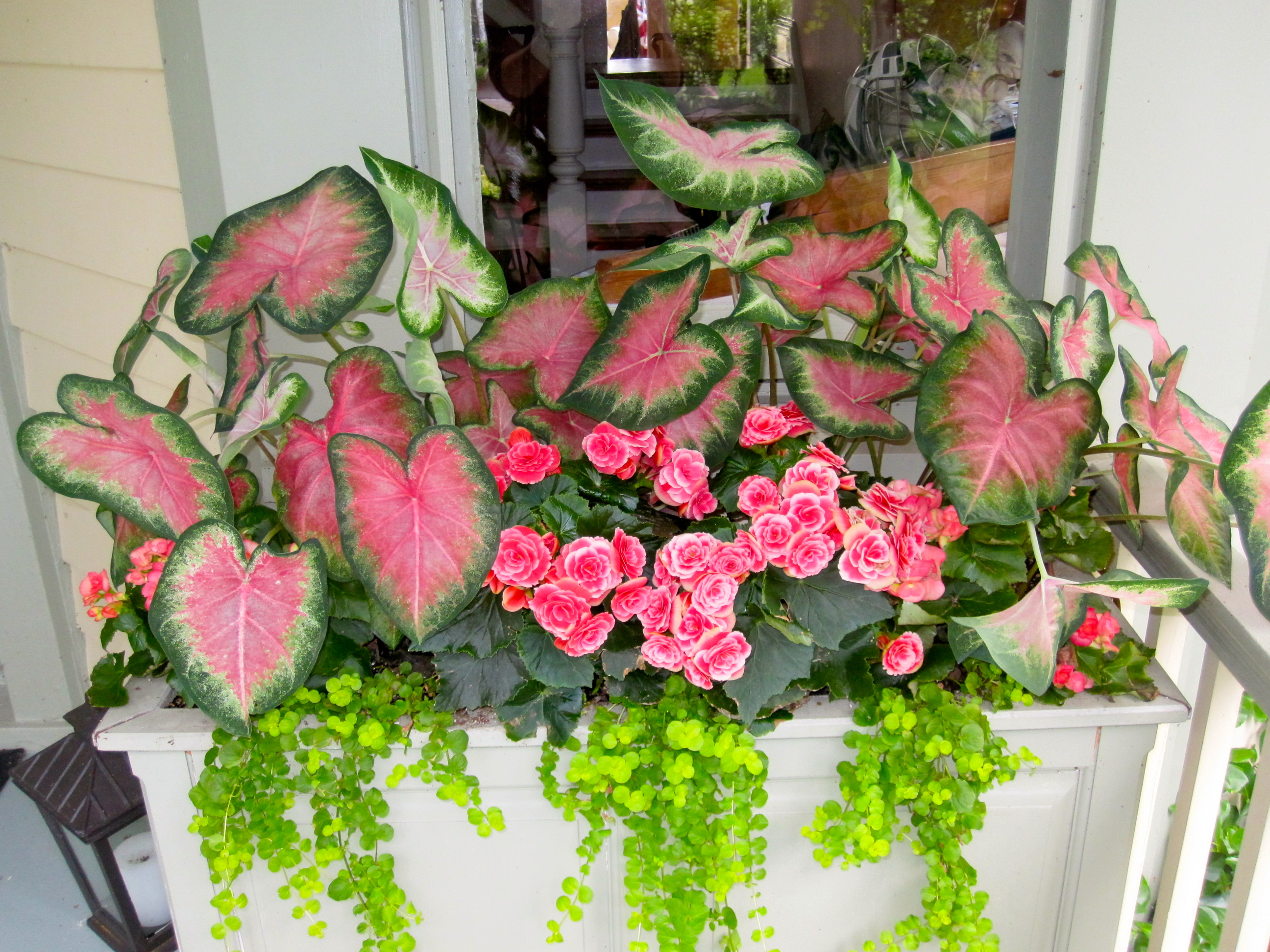 Breast cancer gardening shade container breast cancer authority - Container gardens for shade ...