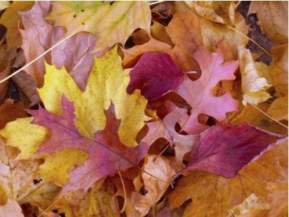 Composting Leaves For Breast Cancer