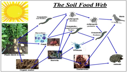 Soil Food Web Composting For Breast Cancer