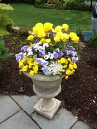 Blue and lavender violas and pansies, white osteospermums, alyssum, yellow ranunculus.