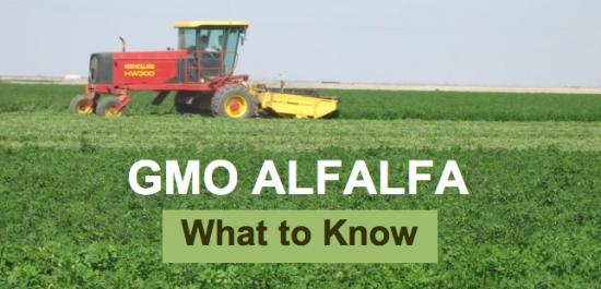 GMO Alfalfa & Breast Cancer