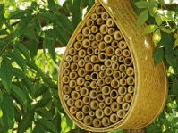 Housing The Bees