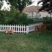 Dog Friendly Tips For A Healing Garden