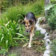 Healing Garden Dog Path