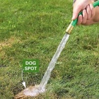 Watering Lawn To Dilute Urine