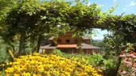 16- spa through flowers in garden