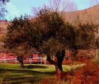 18-apple orchard in fall
