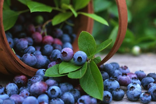 Blueberries for breast cancer prevention