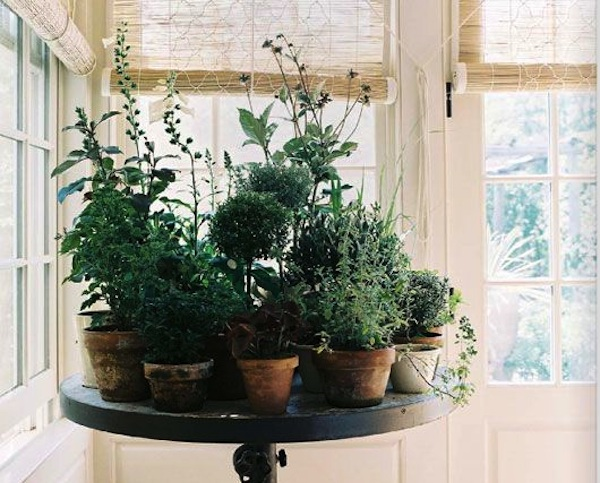 Medicinal indoor herb garden for breast cancer breast for Indoor gardening expo 2014