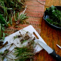 Harvesting Dandelion Roots For Cancer Healing