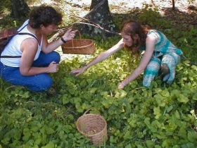 Harvesting Medicinal Roots For Healing