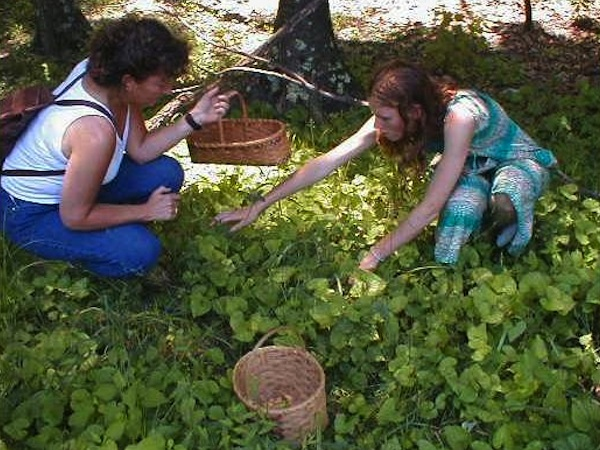 Harvesting Medicinal Roots For Healing