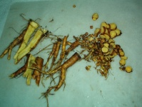 Yellow Dock Root For Breast Cancer Healing