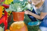 Pumpkin Planters For Breast Cancer Healing Garden
