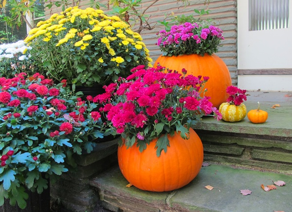 Pumpkin Superfood Planter Ideas For Breast Cancer Garden