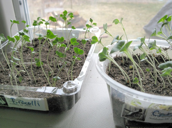 How Home Gardens Are Changing the Local Food System and Your