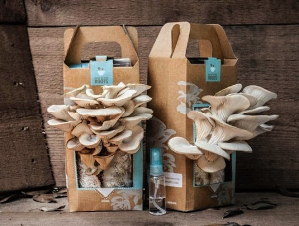 Mushroom Growing Kit For Breast Cancer Gardening
