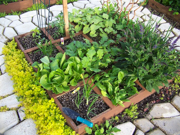 Tips For Beginner Superfood Garden