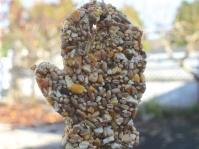 Cookie Cutter Bird Seed Feeder