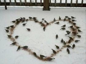 Feeding Wildlife In The Winter