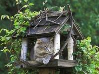 Feeding Wildlife In Your Backyard