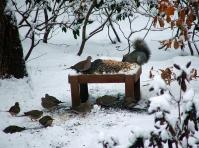 Healing Garden Winter Wildlife