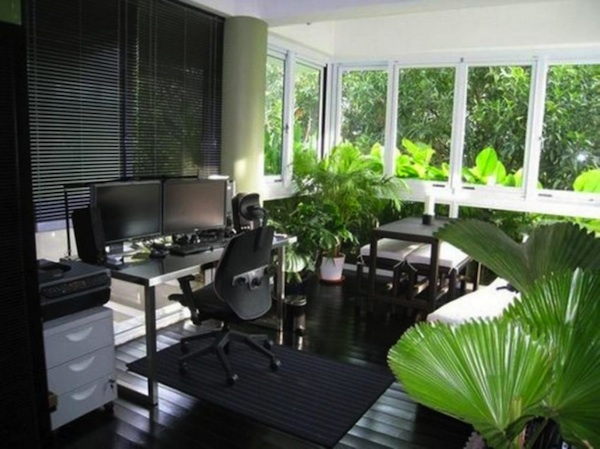 Breast Cancer Healing Indoor Plants For Home Office