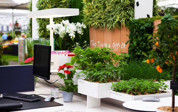 Home office ideas for a healthy healing space breast for Indoor gardening diana yakeley