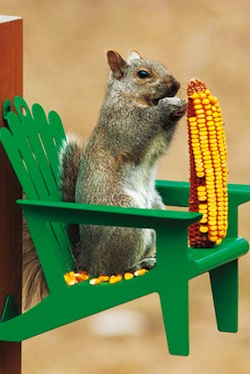 Healing Garden Squirrel Feeder