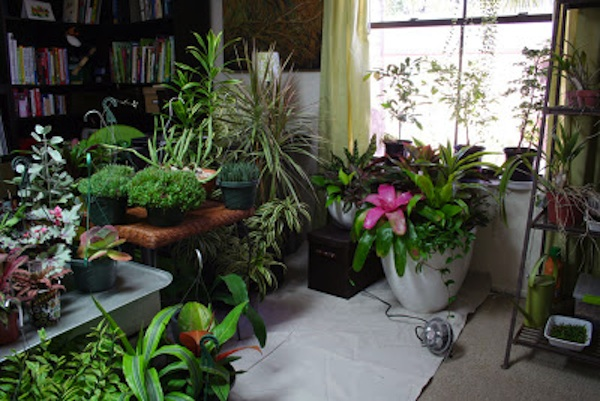 Home Office Garden Indoors