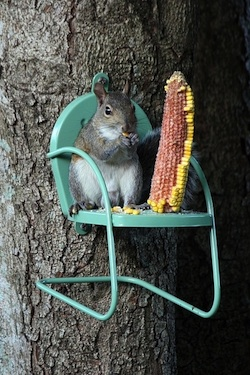 Squirrel Feeder For Healing Garden