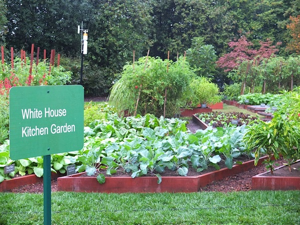 White House Garden Goes Organic For Healthy Lifestyle