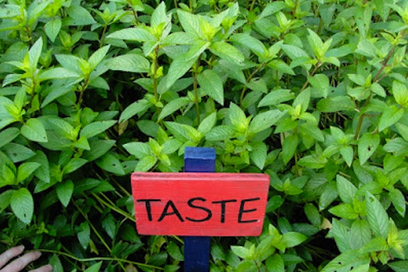 Gardening for the senses - Taste