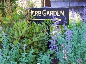 Medicinal Flower Garden For Breast Cancer