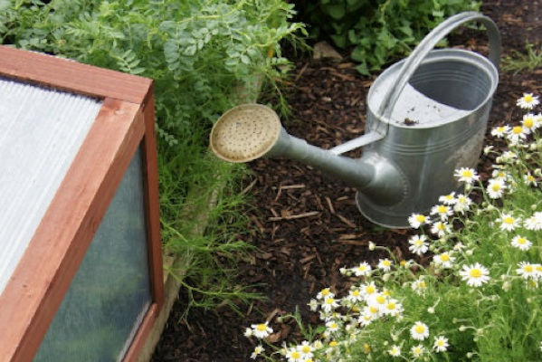 How To Grow Chamomile From A Teabag