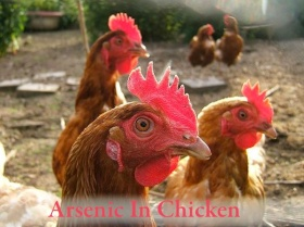 Arsenic In Chicken - Breast Cancer Authority Blog
