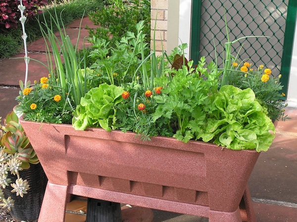 Vegetable Container Gardening Ideas small space gardening idea uses a trellis to grow vegetables vertically photo Turnip Root Container Garden Ideas For Breast Cancer Healing