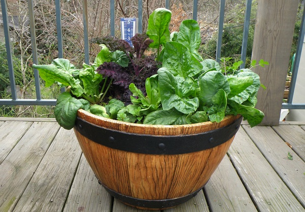 Container Garden Ideas For Breast Cancer
