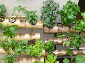Hydroponic Garden Ideas For A Breast Cancer Healing Garden