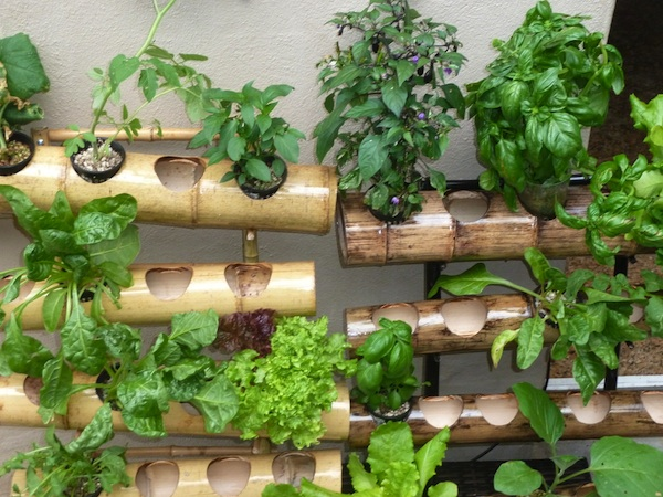 Hydroponic Garden Ideas For A Breast Cancer Healing Garden