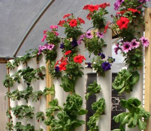 Start Your Own Vertical Garden