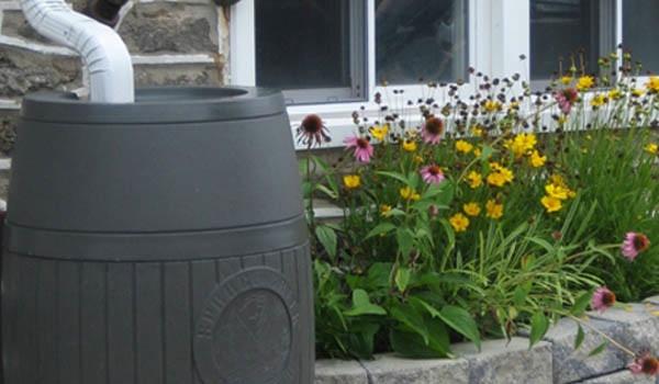 barrel garden. Rain Barrel For A Breast Cancer Healing Garden O