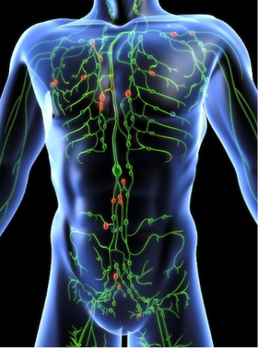 Why your Lymphatic System is Critical to your Overall Health