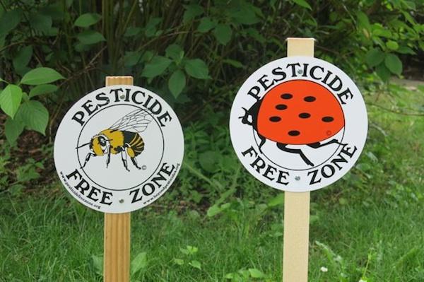 Breast Cancer Pesticide Free Garden