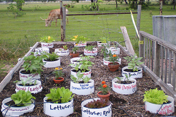 Beautiful ... How To Grow A Fall Broccoli Container Garden.  Broccoli 3 Gallon Container Garden For Breast Cancer Amazing Pictures