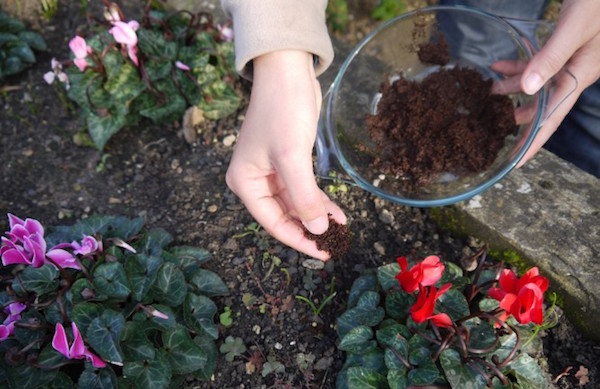 Eco Friendly Fertilizer For Your Garden U2013 Used Coffee Grounds U2013 Breast  Cancer Authority