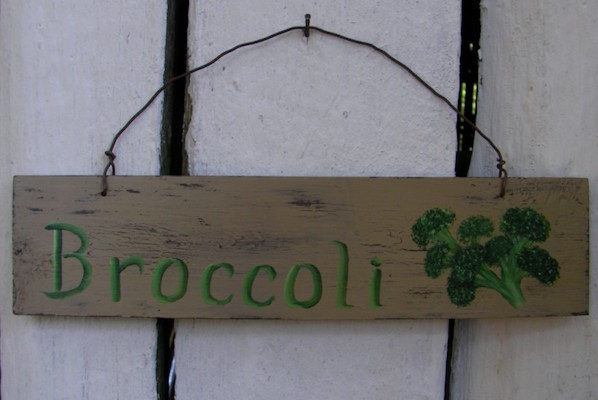 growing-a-fall-broccoli-garden-for-breast-cancer-healing